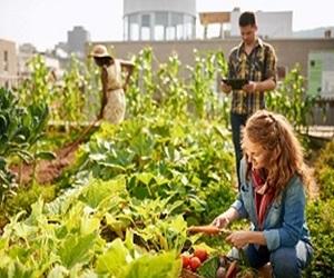 Zwei Frauen und ein Mann arbeiten im Garten