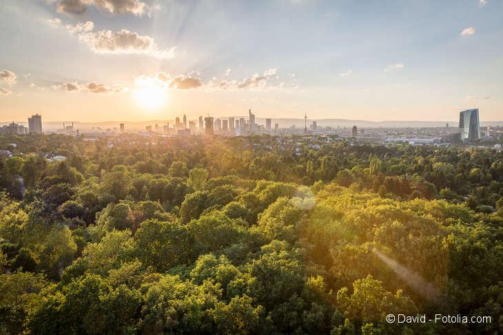 Im Vordergrund der Blick auf zahlreiche Bäume von oben. Im Hintergrund die Skyline einer Großstadt.